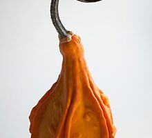 Farmers Market Gourds 2014 -3 by BonnieJames