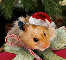 Merry Christmas Hamster by jkartlife