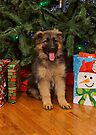 Christmas Puppy by Sandy Keeton