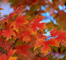 Shades Of Fall by Diana Graves Photography