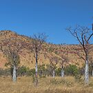 Boab Country- East Kimberley W.A. by Sue  Fellows