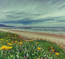 Spring by Shari Mattox