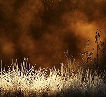 14.10.2013: Cold October Morning by Petri Volanen