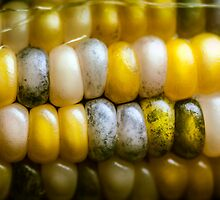 Sweet Corn 2 by maxblack