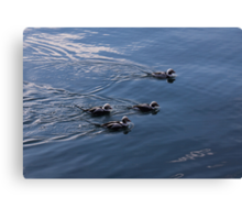 Almost Synchronized Swimming  Canvas Print