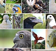 Wildlife Montage by Jacob Thirkettle