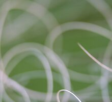 Abstract Image of Green Palm Leaves  by taiche