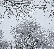 Snow and Trees by Frank Romeo
