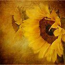Golden Sunburst by OpalFire