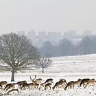 deer in the park by mike parker