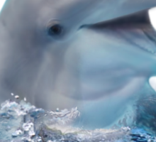 Happy Dolphin Sticker