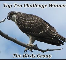 The Birds Top Ten Challenge Winner Banner by hummingbirds