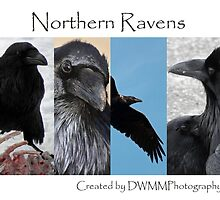 Northern Ravens by DWMMPhotography