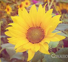 Girasol by afeimages