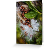 Large Milkweed Bugs Greeting Card