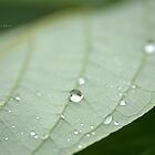 """ Tiny Droplets "" by Richard Couchman"