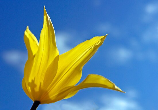 Yellow on Blue by cclaude
