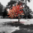 Blood Tree by hannahsview