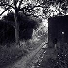 Hayling Billy Track Path by dogboxphoto