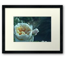 Pale Blue Rose Framed Print