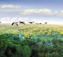 Flyover by Igor Zenin