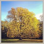 Golden Bjolsen Tree by appfoto