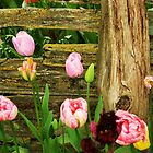 Fence & Flowers by Dani LaBerge