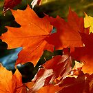 Fall leaves in the wind by jammingene