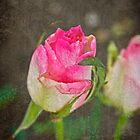 Vintage Rose by Valerie  Fuqua