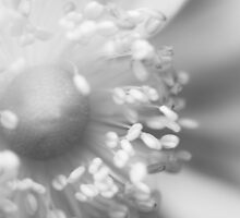 Close Up Floral Beauty in Black and White by Natalie Kinnear