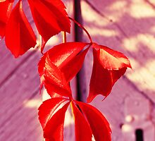 Red leaf by MQ20