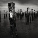 No Conformist by Peter Denniston