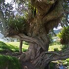 Twisted tree by lezvee