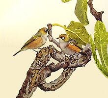Silvereyes on Fig Tree by melhillswildart