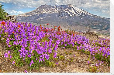 Color from Chaos - Mt. St. Helens by JamesA1