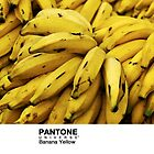 Real Life Pantone: Banana Yellow by coffeespoon
