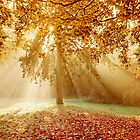 Autumn sunburst by Lyn Evans