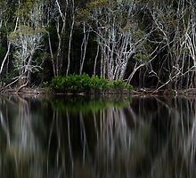 Macksville Mangroves by DonnaLB