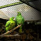 Love Parrots by Al Bourassa