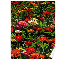 Floral Extravaganza ~ Part Seven Poster