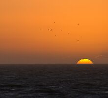 Sunset and Gulls by Sue Robinson