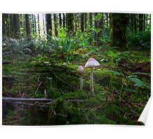 In The Light ~ Wild Mushrooms ~ Poster