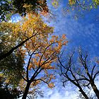 Autumn Skyscape by Frank Romeo