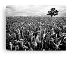 Earn Your Corn Canvas Print