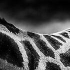 Giraffe by Oliver Koch