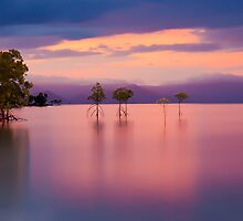 Pink sunset at Orpheus Island by Janette Anderson