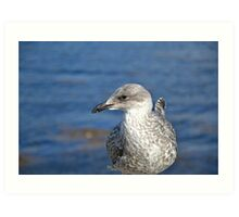 A Seagull's Life Art Print