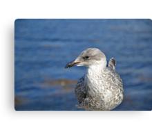A Seagull's Life Canvas Print