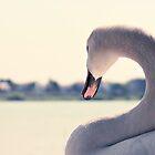 Swanlake by Oliver Koch