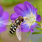 Hoverfly 2 by relayer51